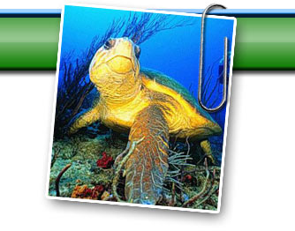 the importance of the issues related to turtle excluder devices One important issue in marine conservation lies with the  turtle excluder  devices, or teds, are positioned in nets and divert turtles to an exit.
